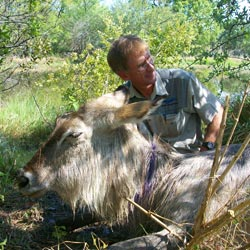 Roger and snared female waterbuck