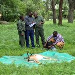 Wildlife Forensics: Using Science to Bust Poachers