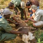 Victoria Falls Wildlife Trust Snare Removal Webinar – Roger Parry