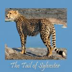 The Tail of Sylvester – October 2018